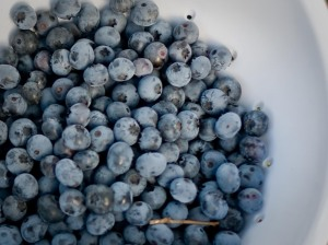 Blueberries-6